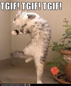 tgif-cat