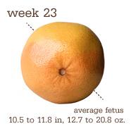 week23
